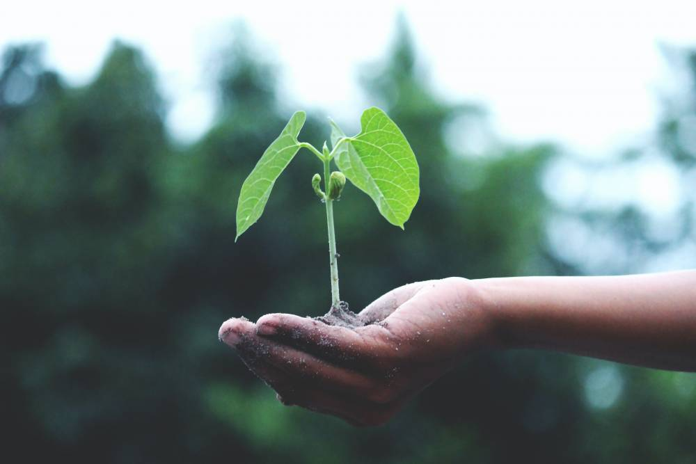 Seed Funding and Early-Stage Funding